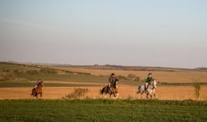 Horses riding on the Ridgeway and Lambourn Downs